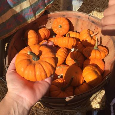 pumpkin Patch (3)